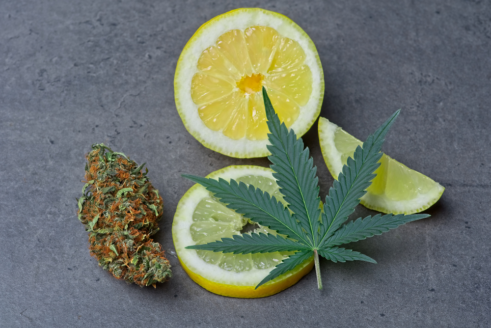 what are terpenes cannabis