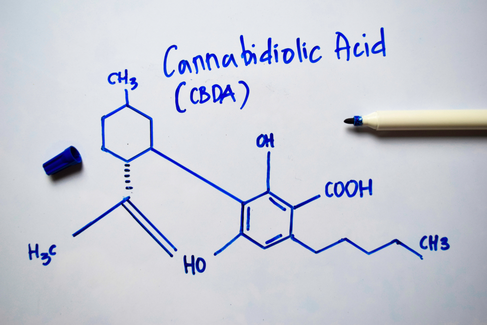 What's The Difference Between CBDA & CBD?