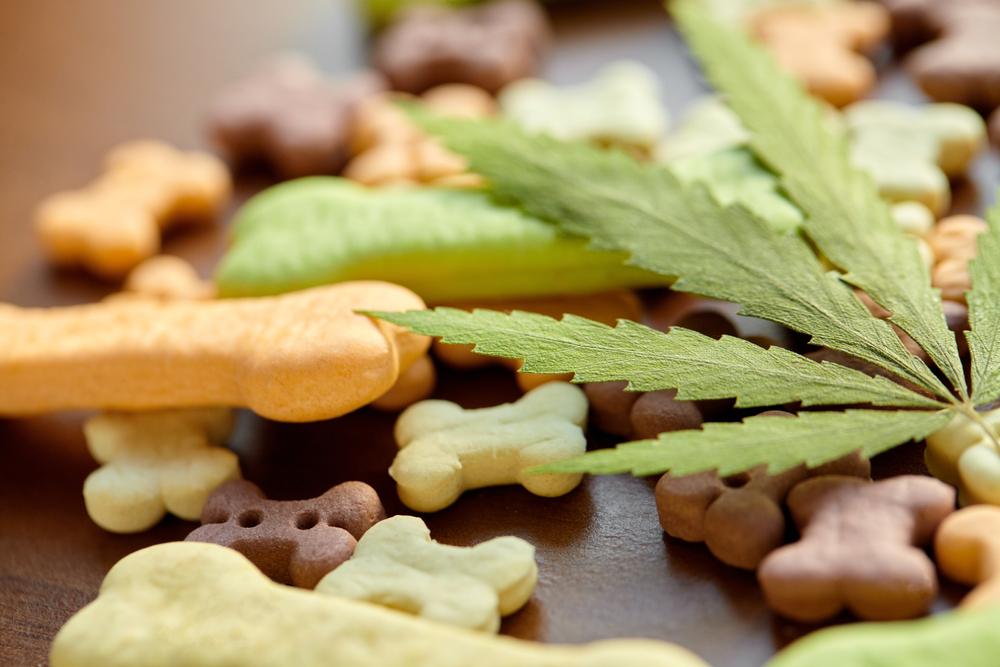 Martha Stewart CBD pets edibles