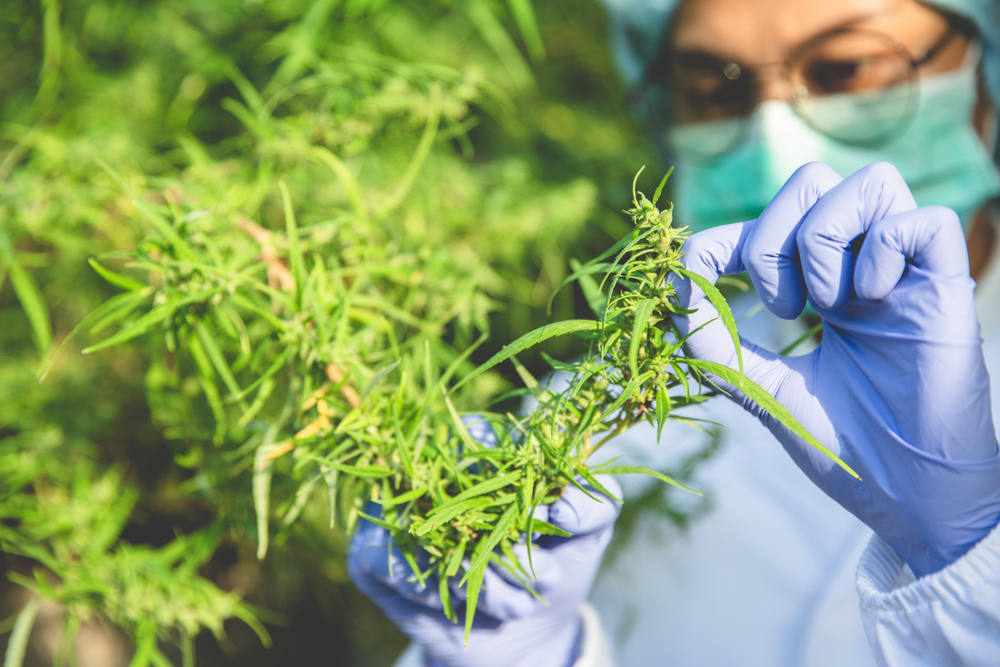 the Endocannabinoid System guide